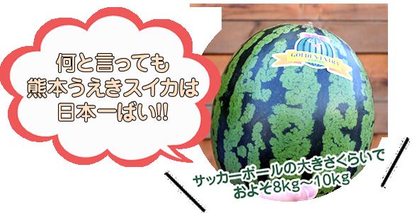 植木西瓜は日本一